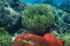 Exquisite coral reefs and underwater paradise of the Dahlak Archipelago, Eritrea (Explore Eritrea)