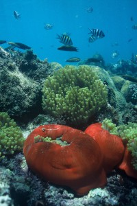 Exquisite coral reefs and underwater paradise of the Dahlak Archipelago